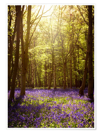 Póster Premium Sunny forest with bluebells
