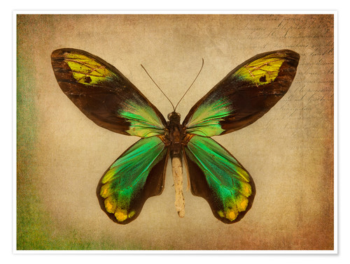 Póster Premium Green butterfly
