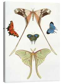 Quadro em tela  Different kinds of butterflies - German School