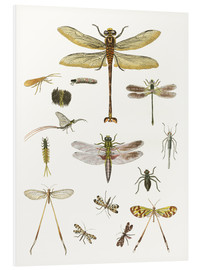 Quadro em PVC  Strange insects - German School