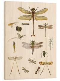 Quadro de madeira  Strange insects - German School