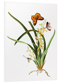 Quadro em PVC  Butterflies and a dragonfly on a plant