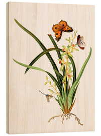 Quadro de madeira  Butterflies and a dragonfly on a plant