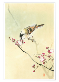 Póster Premium Small Bird and Blossoms