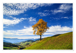 Póster Premium Isolated tree in autumn, Funes Valley, South Tyrol, Italy