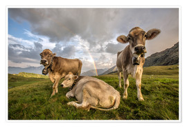Póster Premium Rainbow and cows, Valtellina, Lombardy, Italy