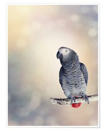 Póster Premium  African Grey on a branch