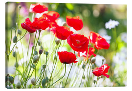 Quadro em tela  Red poppies on a sunny day