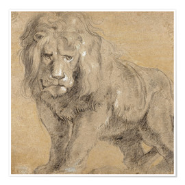 Póster Premium  Study of a lion - Peter Paul Rubens