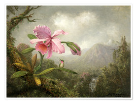 Póster Premium  Orchid and Hummingbird - Martin Johnson Heade