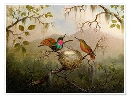 Póster Premium  Two hummingbirds at their nest - Martin Johnson Heade