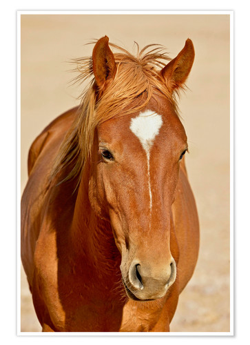 Póster Premium faithful look of a brown mare