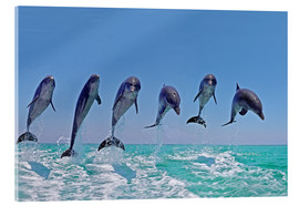 Quadro em acrílico  6 dolphins jump out of the water - Gérard Lacz