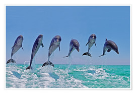 Póster Premium  6 dolphins jump out of the water - Gérard Lacz