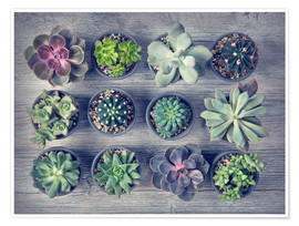 Póster Premium Different succulents above the black wooden background
