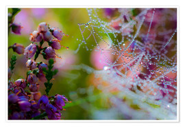 Póster Premium Morning dew on Erica and spider web