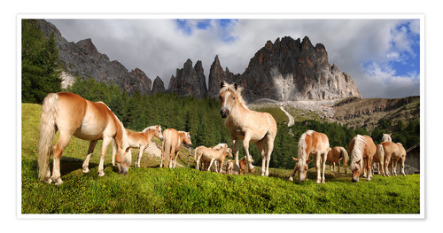 Póster Premium Haflinger horses in a meadow in front of the Rosengarten Mountains