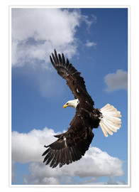 Póster Premium  Freedom on eagle wings