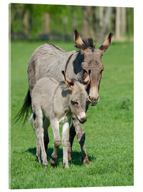 Quadro em acrílico  Donkey mum and her little baby