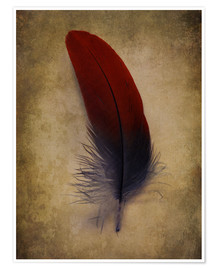 Póster Premium Blue and red feather