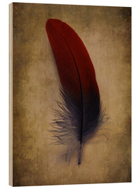 Quadro de madeira  Blue and red feather - Jaroslaw Blaminsky