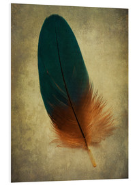 Quadro em PVC  Green and orange feather - Jaroslaw Blaminsky