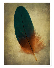 Póster Premium Green and orange feather