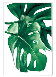 Póster Premium Monstera 6
