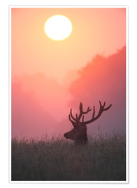 Póster Premium A male deer Stag at sunset