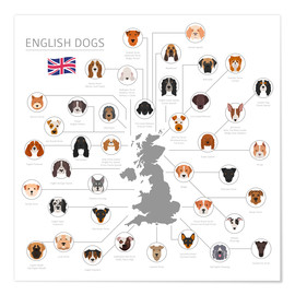 Póster Premium English dog breeds