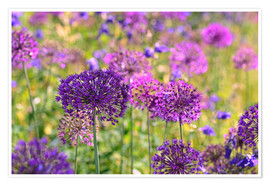 Póster Premium purple allium
