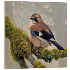 Quadro de madeira  Eurasian Jay sits on a mossy branch - Ikon Images