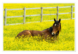 Póster Premium Horse in the rape field