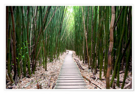 Póster Premium  Trail through the bamboo forest - Pacific Stock