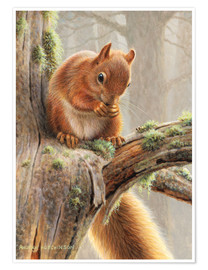 Póster Premium Squirrel crumbles on a branch