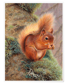 Póster Premium  Squirrel with nut - Ikon Images