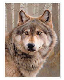 Póster Premium  North American Wolf - Ikon Images