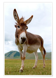 Póster Premium  Portrait of the donkey - Click Alps