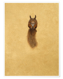 Póster Premium  Leaping Red Squirrel - - Tim Hayward