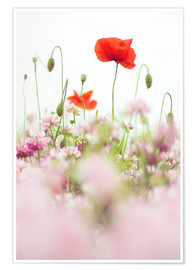 Póster Premium Poppies in the field