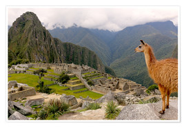 Póster Premium  Lama looks at Machu Picchu - Don Mammoser