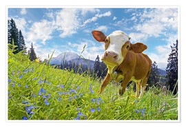 Póster Premium Young cattle Muhh