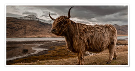 Póster Premium  Highland cattle - Art Couture