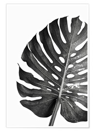 Póster Premium  Monstera preta 03 - Art Couture